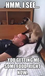 Psychic Meme - psychic cat memes quickmeme
