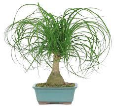 large indoor plant houzz