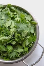 cuisiner l ortie soupe d orties recette facile et détox gourmandiseries