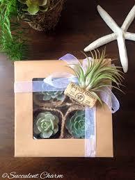 succulent charm gift box 4 assorted succulents 1 decorative