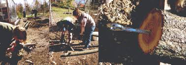 Trellis Construction Preparing For Spring Hops Trellis Construction Thomas Jefferson