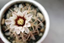 indoor plants images free images petal botany succulent closeup flora close up