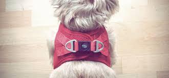 my curli curli plush air mesh step in dog harness vest camo
