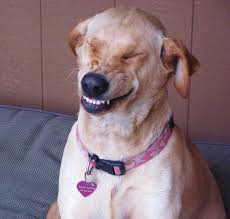 Smiling Dog Meme - pear decoupaged clock using roman numerals on the quarter hour