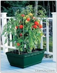 self watering garden planters plant vegetables in containers