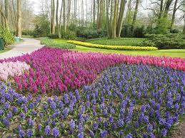 day trip to keukenhof gettin u0027 spring y with it my wanderlusty