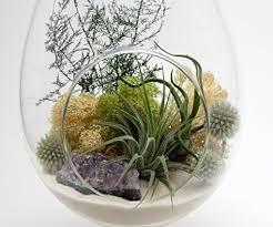 bliss gardens teardrop air plant terrarium with purple amethyst