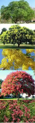 backyard shade trees wonderful trees for small backyards best 25