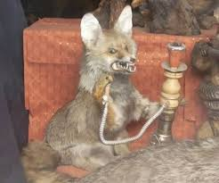 Stoned Fox Meme - create meme stoned fox smokes hookah fox smokes meme stoned