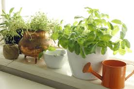 best fruits and vegetables grow indoors this fall