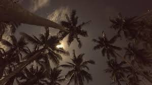 coconut palm tree with the moon and lapse hd 1920x1080