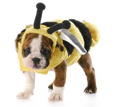english bulldog halloween costumes what u0027s your dog going as for halloween the new warm 106 9