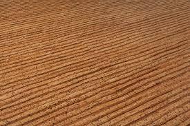 free samples evora pallets cork long plank terra collection