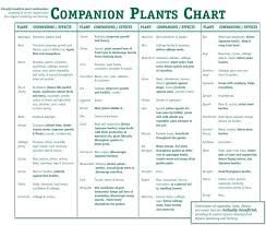 Companion Garden Layout Sle Vegetable Garden Plans Media Garden Companion Planting