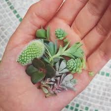 succulent arrangements mini succulent arrangements in unconventional pots leaf clay