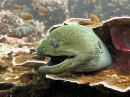 padi advanced diver the adventure club padi dive centre koh phi phi
