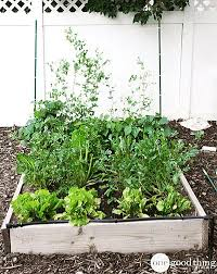 tips for harvesting u0026 storing your homegrown produce one good