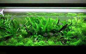 aquarium decorations amazon youtube