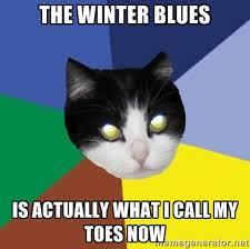 Cat Memes Generator - winnipeg cat