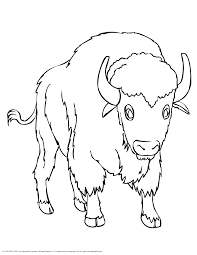bison coloring pages coloring page