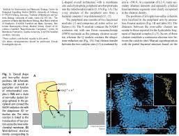 nadh dehydrogenase complex i in mitochondria