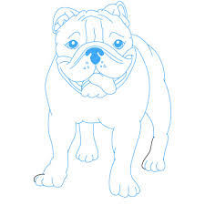 drawings of cute bulldogs anjing bulldogku pinterest