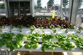 indoor hydroponic vegetable garden gardening ideas