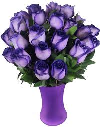 purple roses 120 best gorgeous roses images on pretty flowers