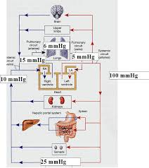 Anatomy Of Human Heart Pdf Chapter 2