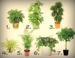 purifier l air d une chambre les 7 meilleures plantes pour purifier l air intérieur