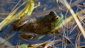 kids tadpoles