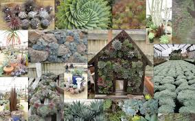 Succulent And Cacti Pictures Gallery Garden Design Cactus Succulent Garden Design At Ideas With Designs Pictures
