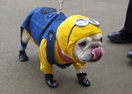 Halloween Costumes Small Dogs Minions Dog Costume Halloween Minion Despicable Follow Project
