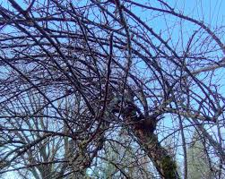 when and how to prune tree limbs properly