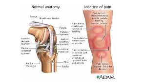 Interactive Knee Anatomy What Is The Patellofemoral Joint