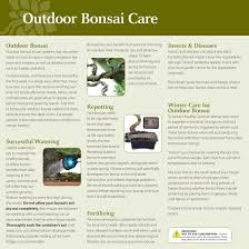 brussel u0027s gardenia bonsai medium outdoor walmart com