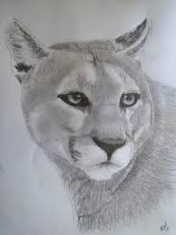 panther original sketch portrait by pigatopia drawing by shannon ivins