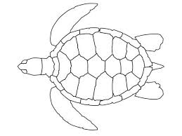 181 turtles miscl images cartoon turtle