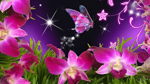 butterflies and flowers butterfly flowers orchid purple