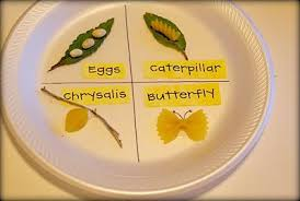 butterfly life cycle in noodles
