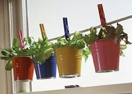 plante aromatique cuisine mini jardinières et pots d intérieur aux herbes aromatiques herbes
