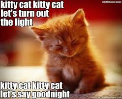 Goodnight Meme Cute - cute kitten quotes pets wallpapers