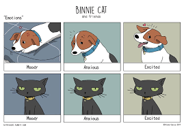 Cat And Dog Memes - 10 hilarious differences between cats and dogs bored panda