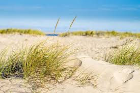 see cape cod sand dunes with art u0027s dune tours