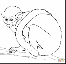 surprising squirrel monkey coloring pages with monkey coloring