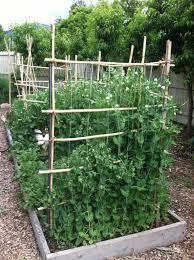 Vertical Vegetable Garden Design Vertical Vegetable Garden Trellis Home Garden Inspiration