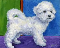 cost of a bichon frise bichon frise paintings fine art america