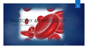Human Anatomy And Physiology Chapter 1 Anatomy U0026 Physiology An Introduction 1 Chapter 1 Key Terms 2