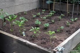 Urban Veggie Garden - urban veggie garden blog