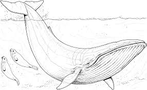 whale pictures to color